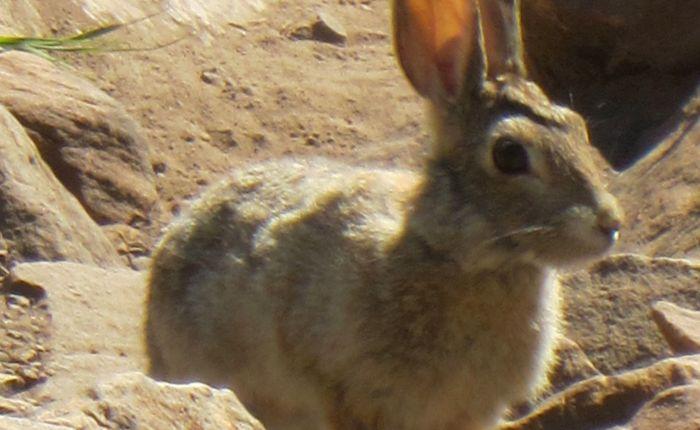 Rabbit 2, PPMHK0